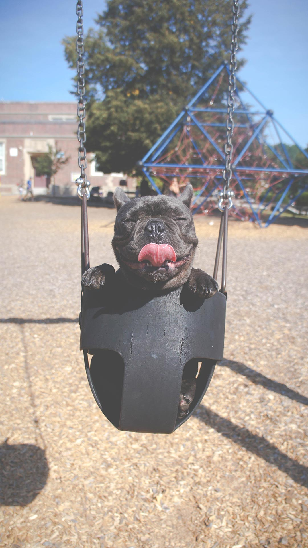 dog in park swing